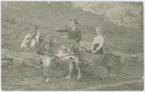 View of a Man Holding a Stick in Front of a Donkey/Mule with a Wagon Behind It, a Lady is Seated On the Wagon