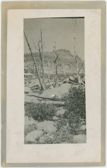 Scenery View, Showing Dead or Burnt Trees In/Near the Cripple Creek Mining District